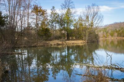 Pond Trees