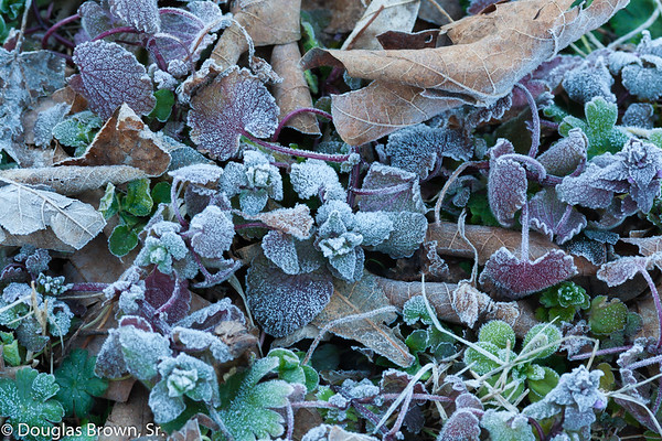 A Touch of Morning Frost