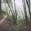 steep ravine vi | marin county, california