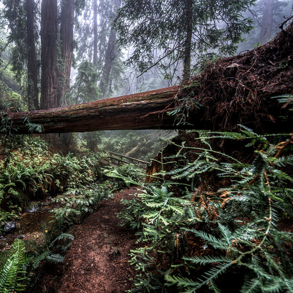 i can see all obstacles in my way | marin county