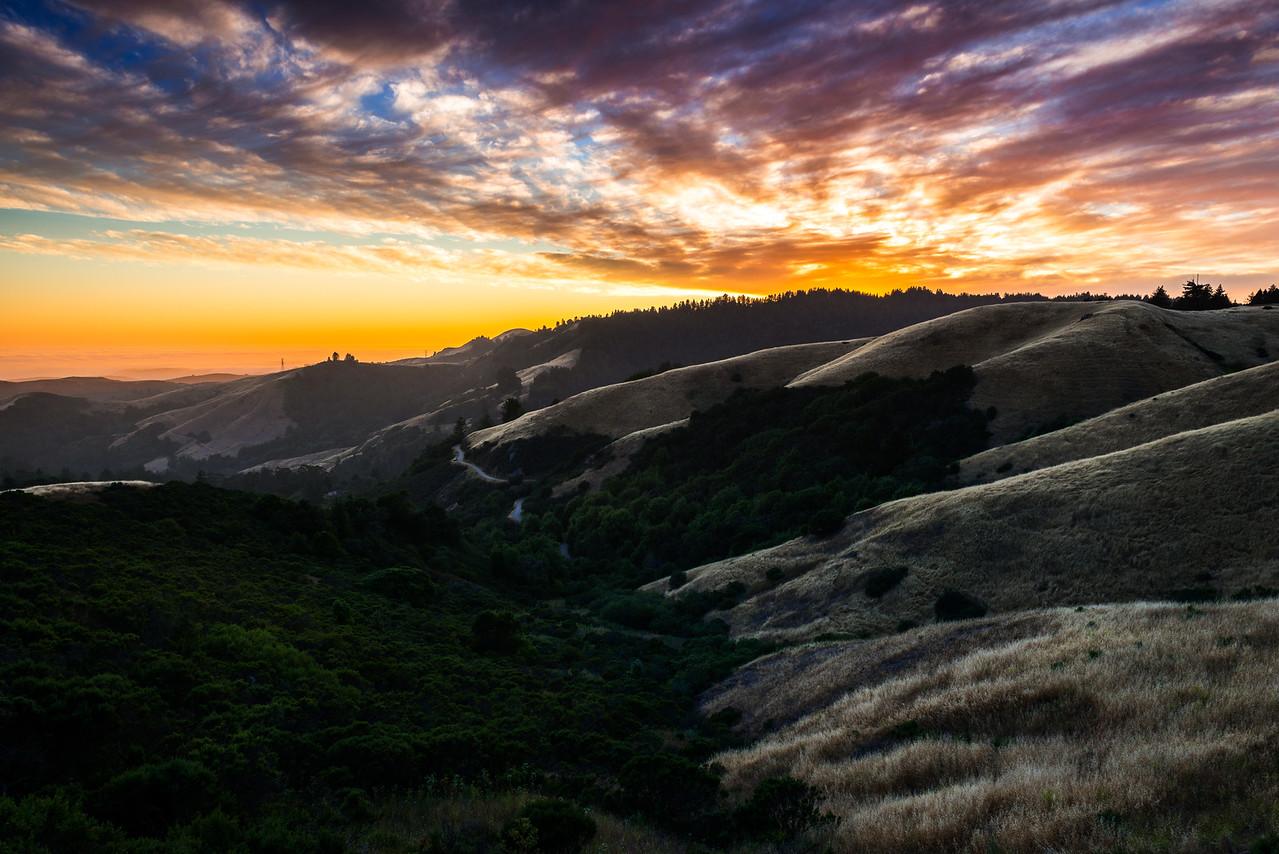 old faithful | woodside, california
