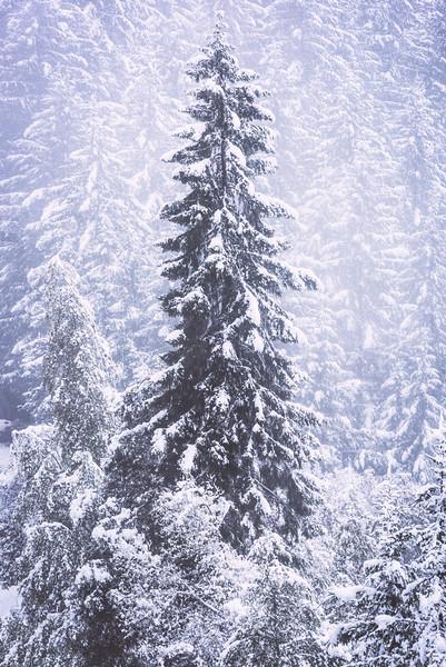 wonderland ii   humboldt county, california