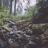 steep ravine ii | marin county, california