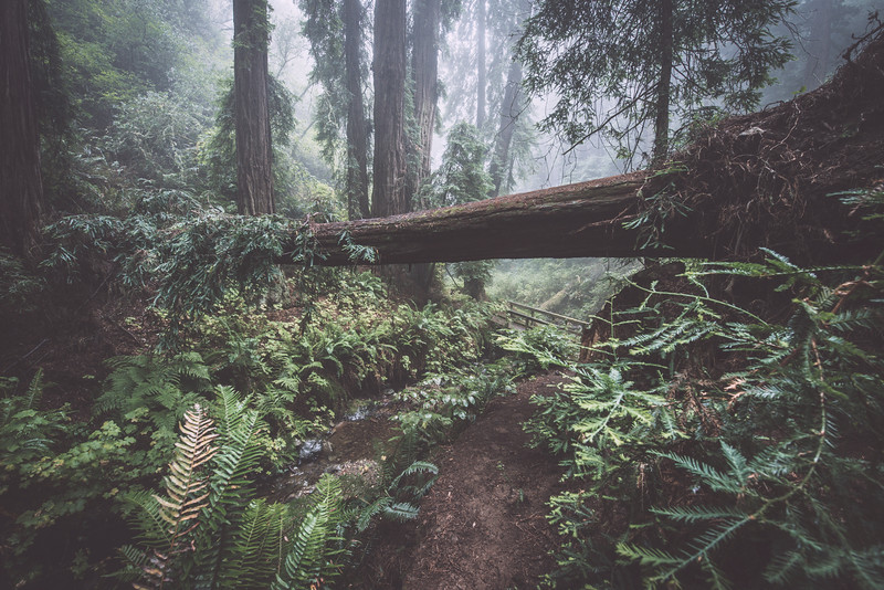steep ravine i   marin county, california