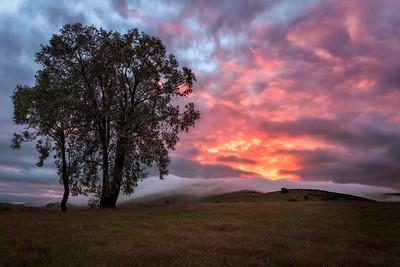 California, Northern California, Landscape, Santa Teresa County Park, San Jose, Sunrise, Fog