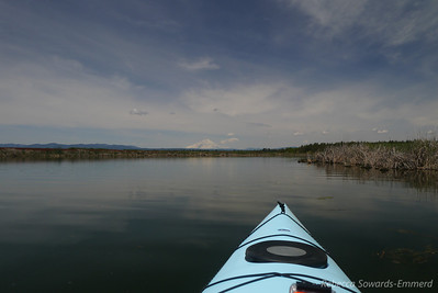 Paddling out from the Rat Farm launch and I'm already impressed with the view. That's Mt Shasta.