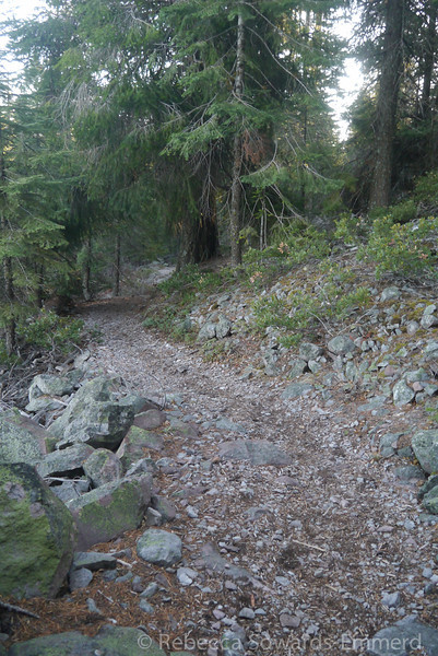 Back into the forest. It's a great hike - the trail climbs steadily and it is easy to get a good pace going.