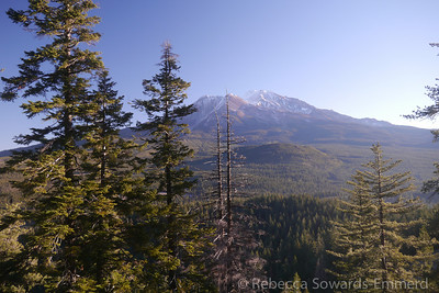 Eventually we see mt shasta through the trees. What a view!