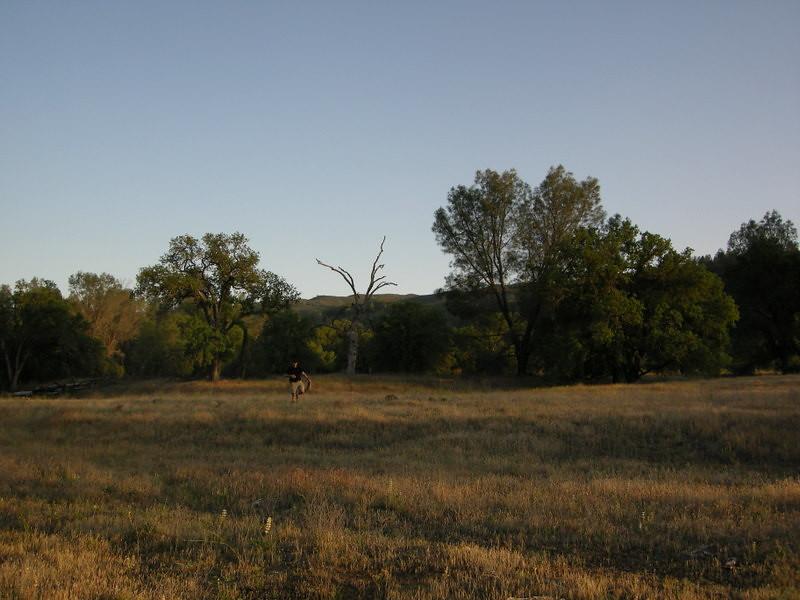 David near camp