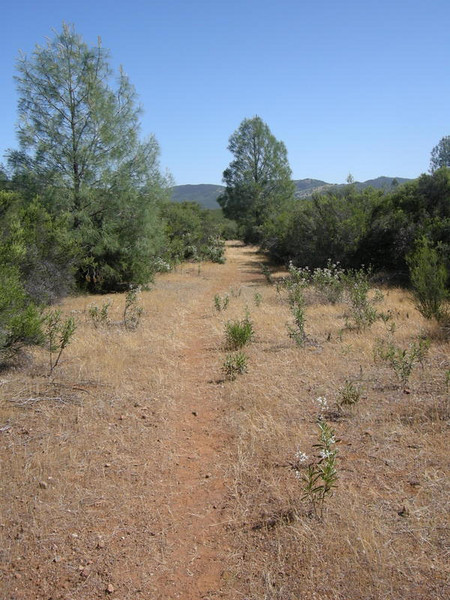 Exposed trail. Hot hot hot today.