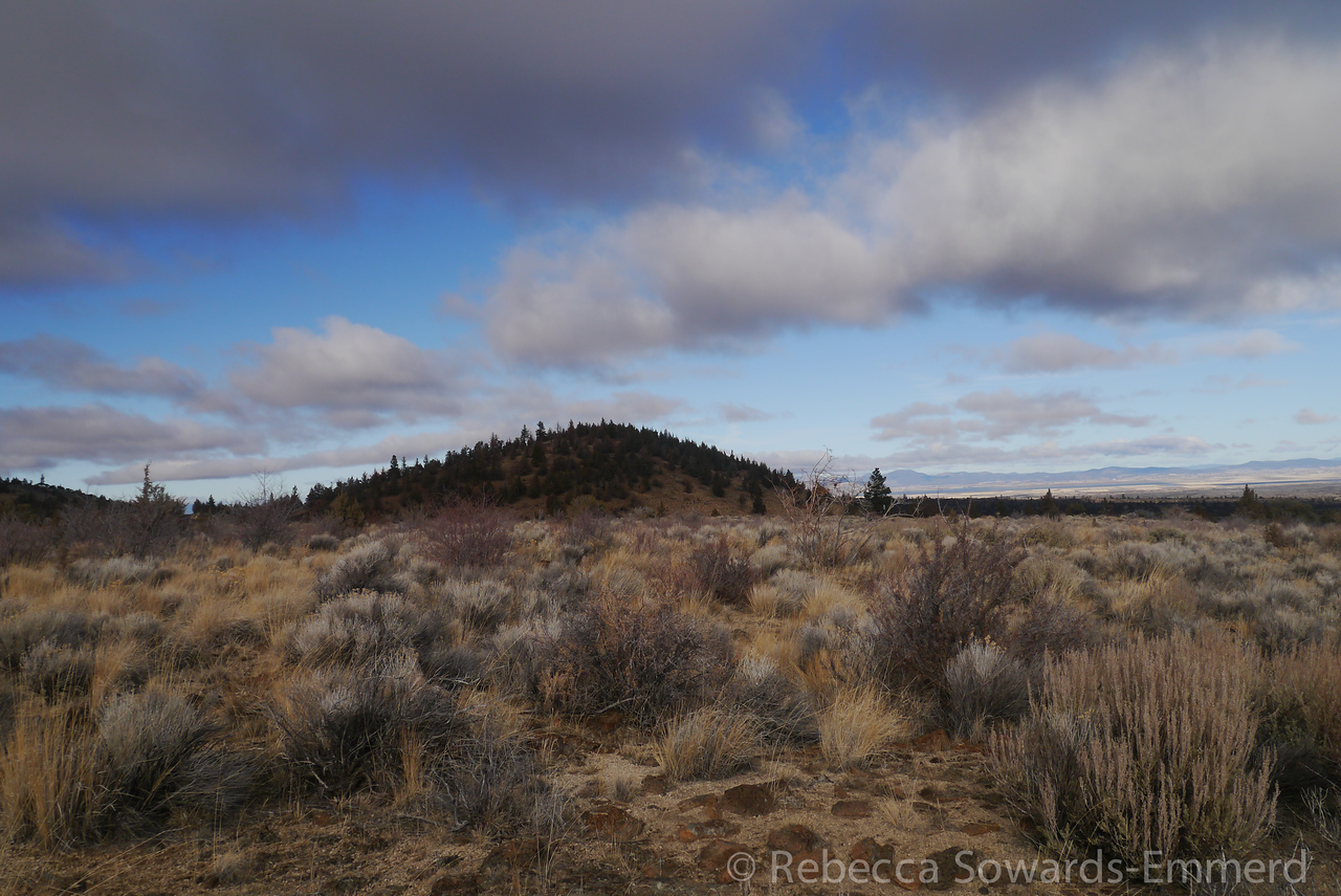 Above ground in Lava Beds