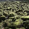 Lichen-ey rocks
