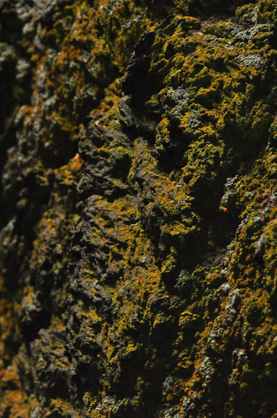 Lichen and lava rock
