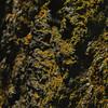 Lichen and lava rock
