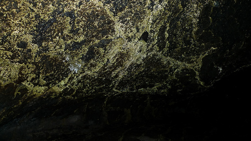 The golden color in this cave comes from the reflection of light from water droplets that bead up on top of a hydrophobic bacteria.