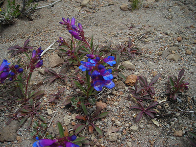 Other flowers toward summit