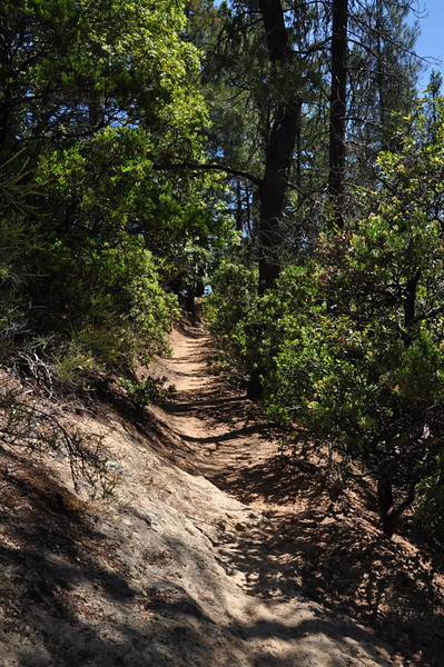 The trail starts off as a rutted single track that switchbacks up through the trees
