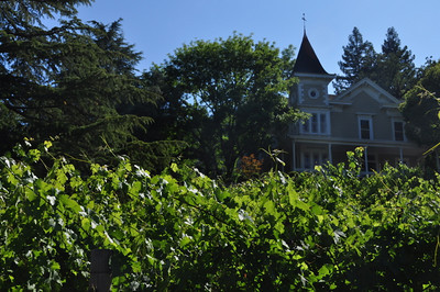 St Clement and vines