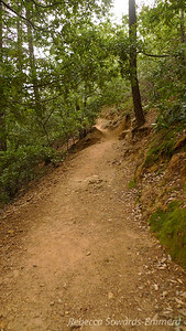 The trail starts off single-track, climbing up gentle switchbacks through a shaded forest.