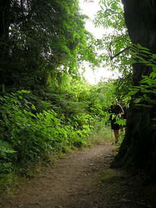 Entering a grove