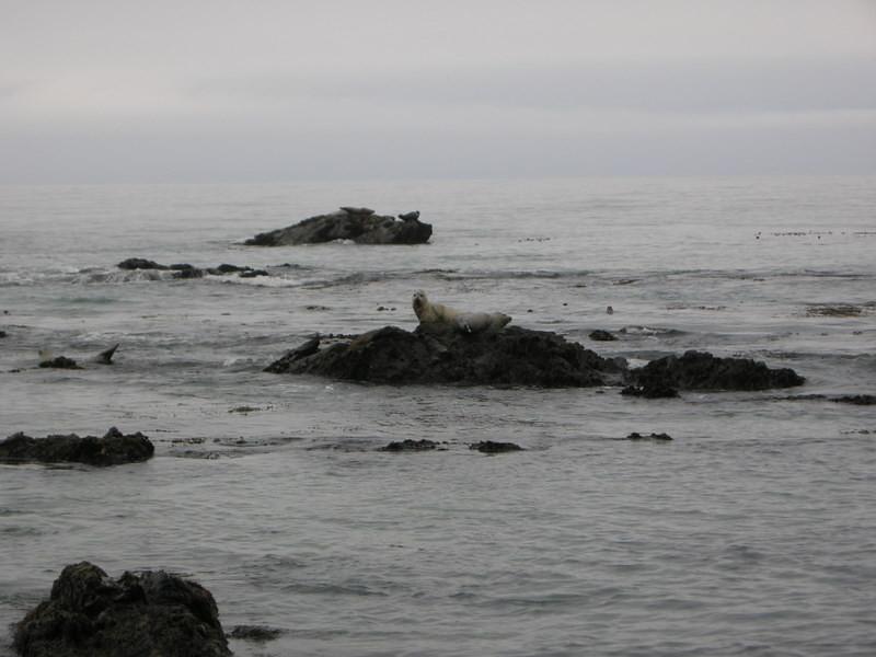 More seals watch us suspiciously as we walk by