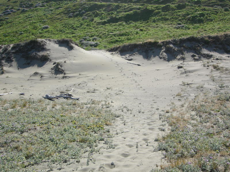 The trail as it starts out from Mattole Beach<br /> <br /> Reminds me a lot of Sleeping Bear Dunes