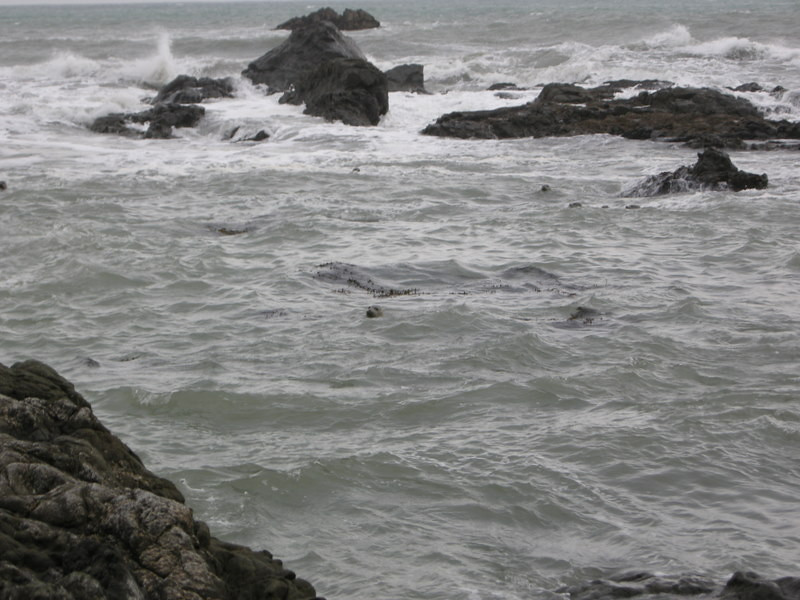 Seals watch us suspiciously from off shore.
