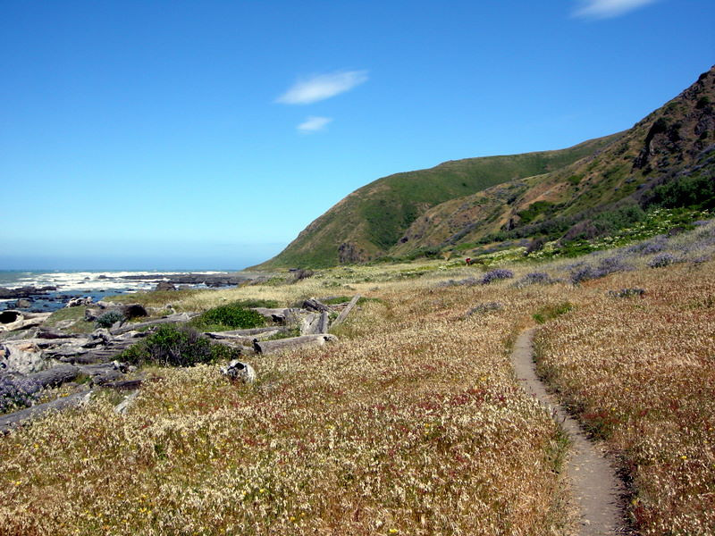 One of the rare stretches of single track trail<br /> <br /> Most of the hike is on the beach or on old 2-track road