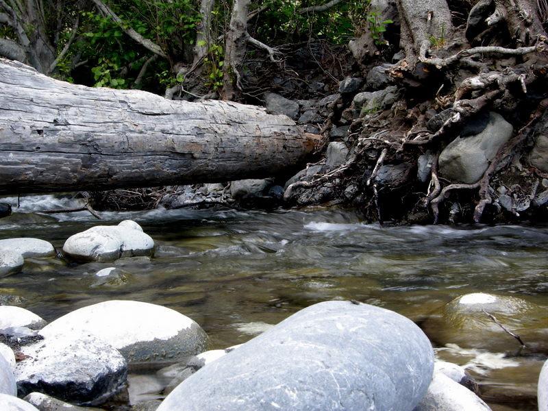 Shipman creek