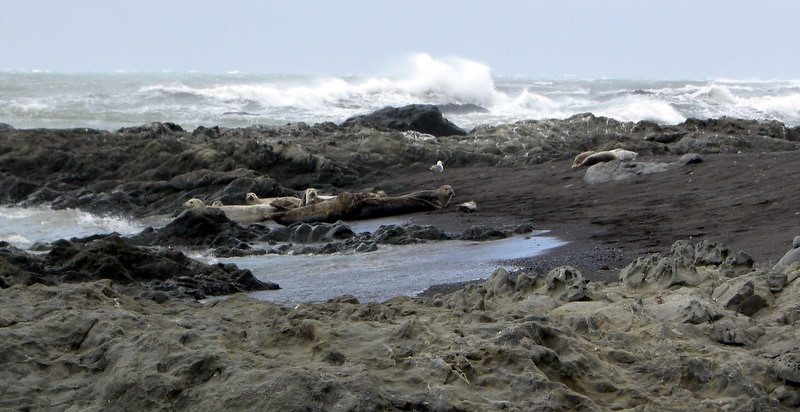 Harbor Seals<br /> <br /> These guys were so curious and nervous (and cute)