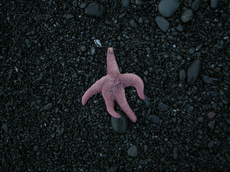 A starfish that the tide left behind