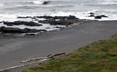 Harbor Seals at Punta Gorda