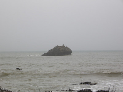 Another rock with loud sea lions