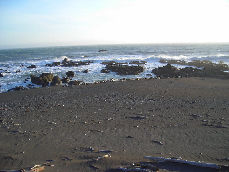 While checking out the light house we noticed this group of Harbor Seals napping on the beach