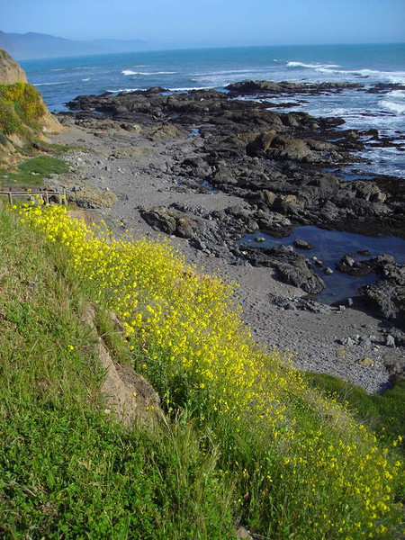Tidepools and flowers at Shelter Cove
