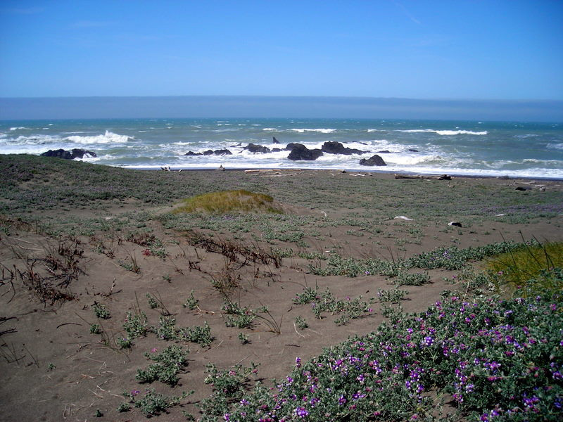The coast up close<br /> <br /> The whole hike is along the seashore. We tried to stick to the old jeep trail where it still existed - walking on the sand is hard.