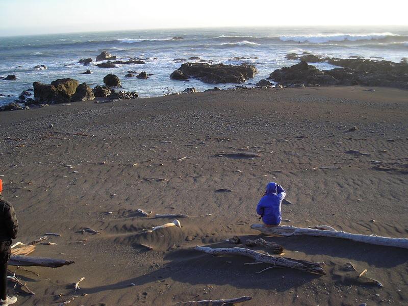 Paige photographs the seals