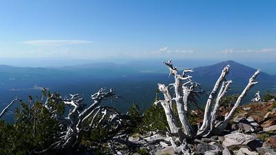 Summit trees and a hazy Shasta