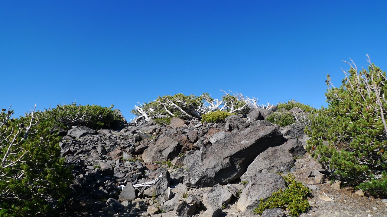 Summit trees