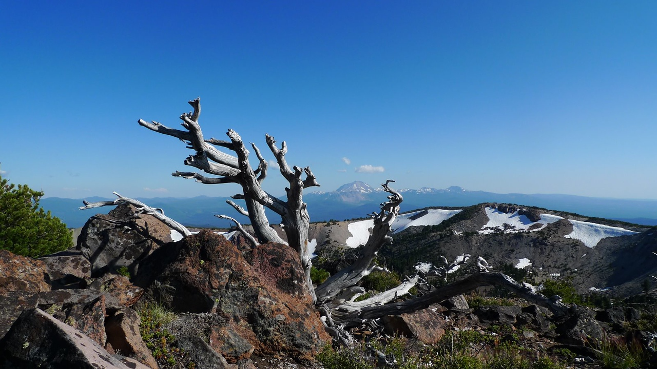 Summit tree and Lassen