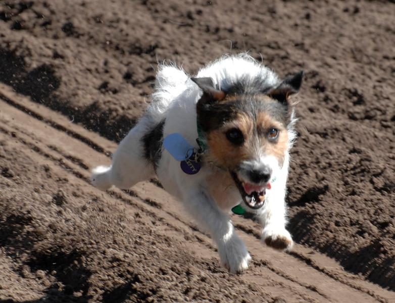 derby dog dash