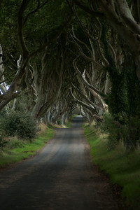 Dark Hedges, Summer
