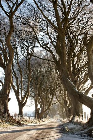 Dark Hedges, Winter