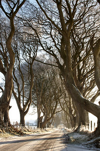 Dark Hedges, Winter