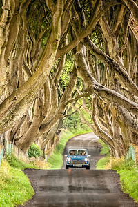 The Mini And The Hedges