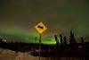 """Moose Crossing Aurora"" - February 1, 2012"