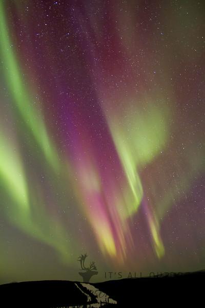 Aurora over Moose Mountain