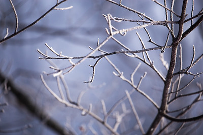 Frosty Branches: Suttons Bay, Michigan