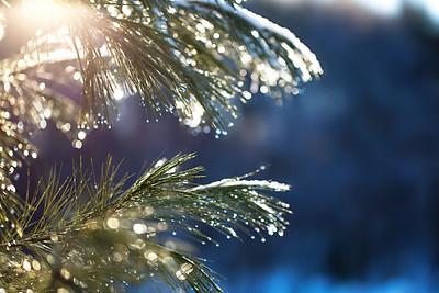 Sparkly evergreens: Suttons Bay, Michigan