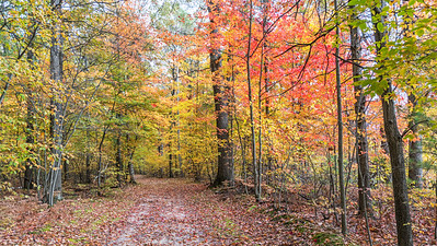Autumn hiking trail: Midland, Michigan